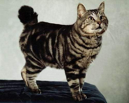 Кошки бывают разные - рыжые, чёрные, белые, серые, пятнистые...